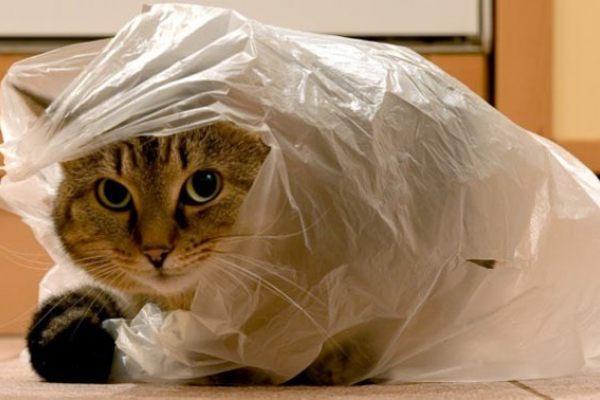 В саратовскую мэрию принесли кота в мешке