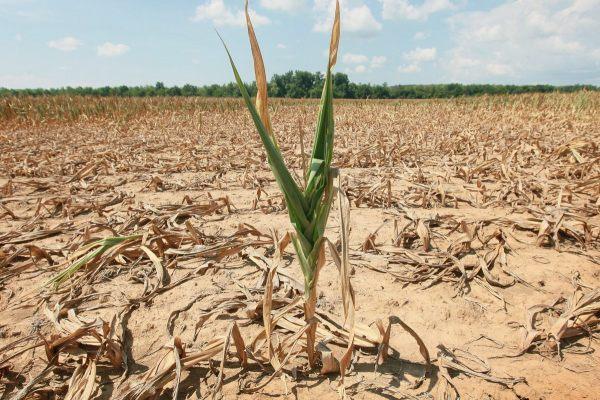 Засуха обесценивает губернаторское обещание