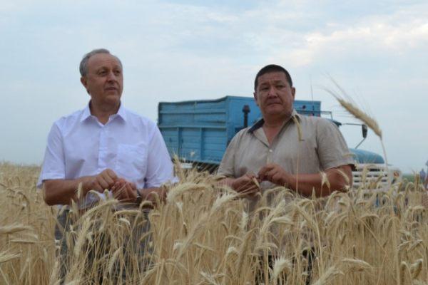 Вопрос о сборе 6 млн тонн зерна можно закрывать